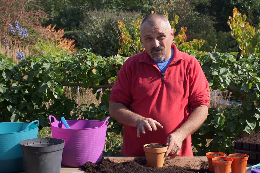 Sowing tomato seeds video