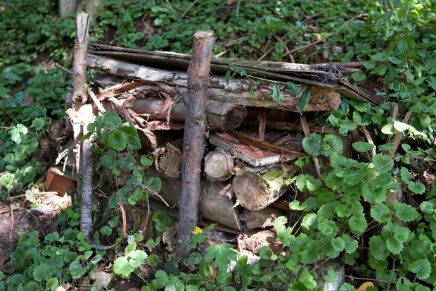 dead-wood-habitat-2