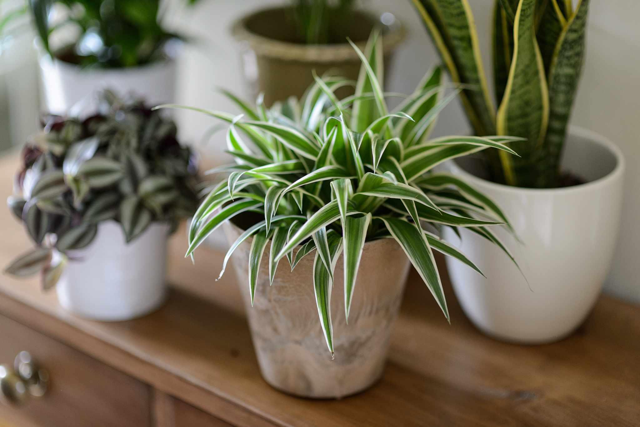 Easy Houseplants to Grow