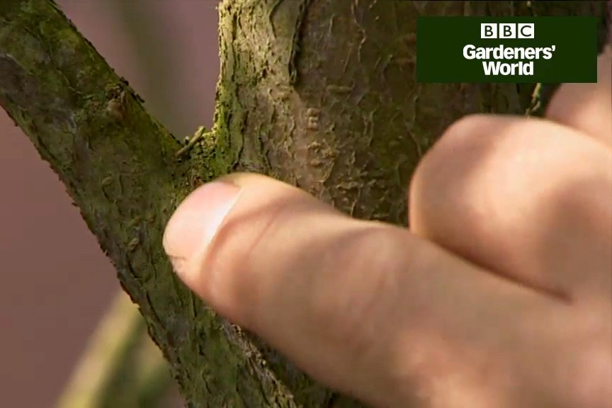 How to remove dead wood from plants video