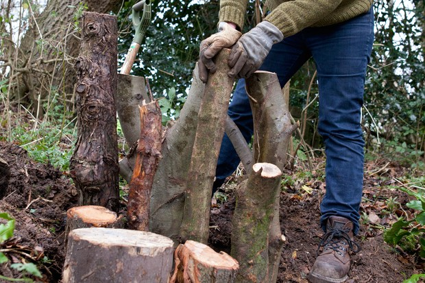 How to make a stumpery - standing the logs in the pit