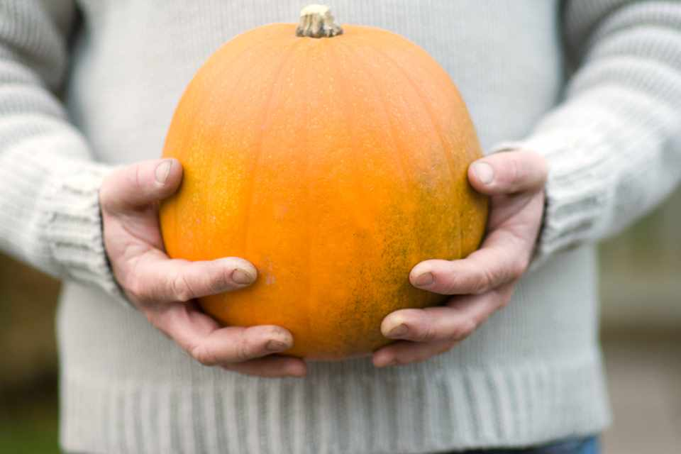 Harvested pumpkin