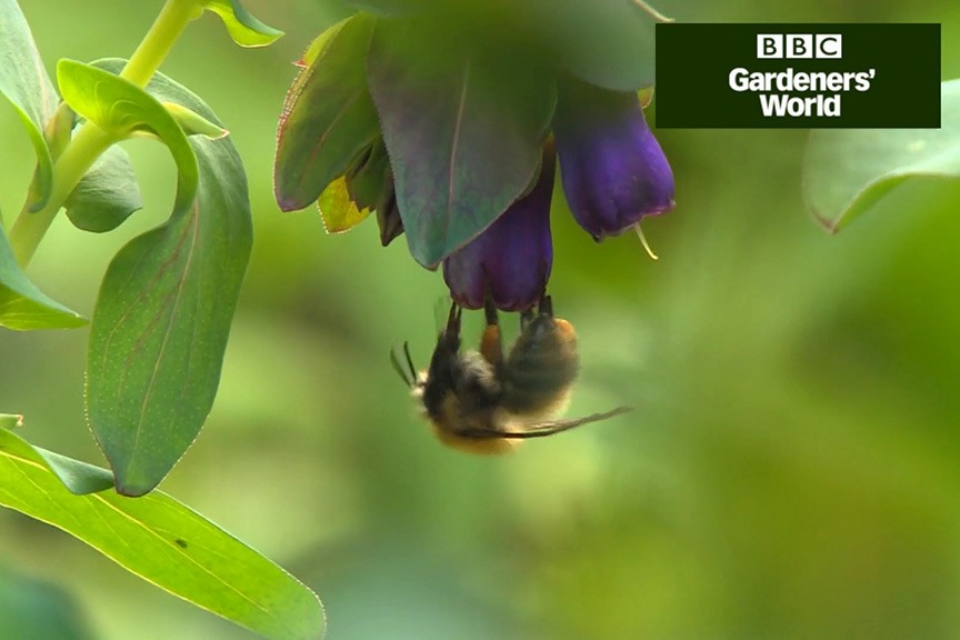How to create a wildlife garden part six of video