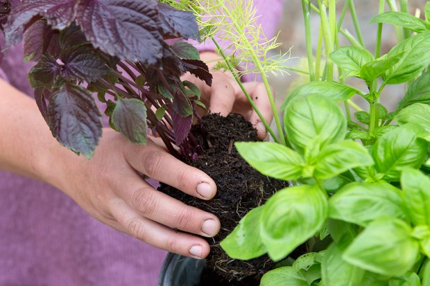fill-between-the-plants-with-compost-and-water-2