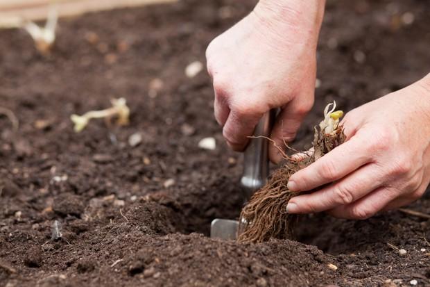 planting-runner-2