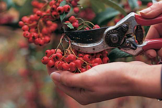 How to extract seeds from berries