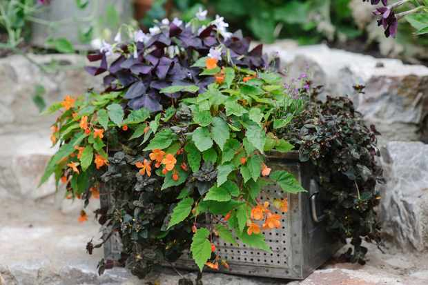 pot-for-shade-planted-with-lysimachia-oxalis-and-begonia-2