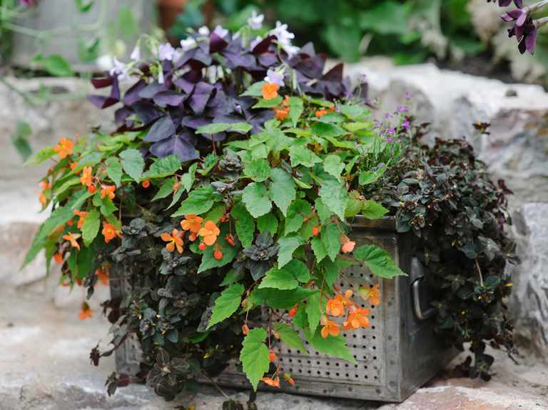 Container Plants For Shade Bbc Gardeners World Magazine
