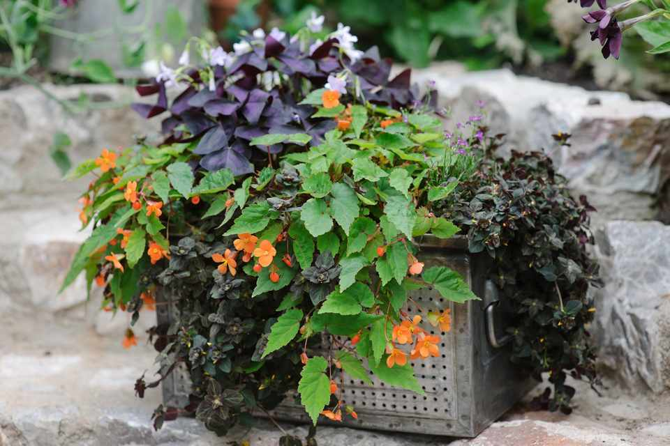 Container Plants For Shade Gardeners World Magazine
