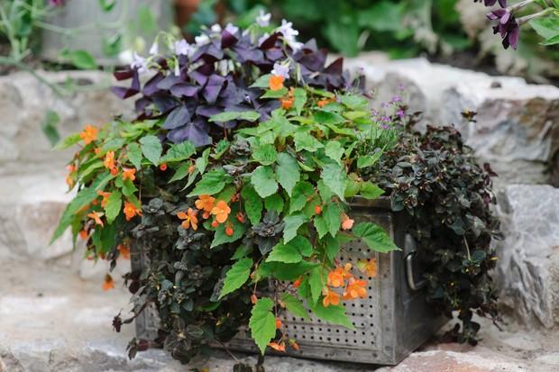 20 Plants For Dry Shade Bbc Gardeners World Magazine