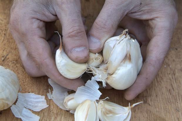 garlic-jolimont-2