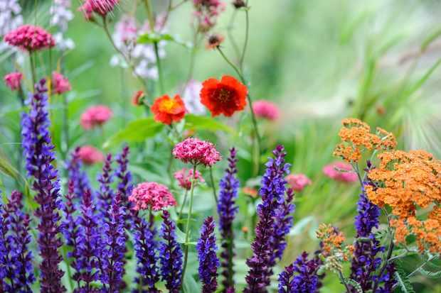 meadow-plant-pot-display-2