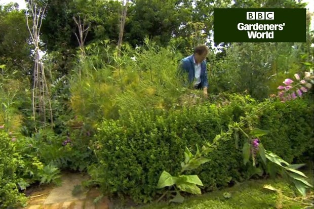 How to cut back spent border plants