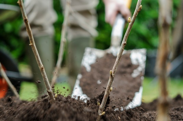 mulch-the-soil-surface-2