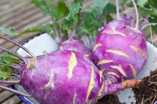 10 best vegetable crops for shade - kohlrabi