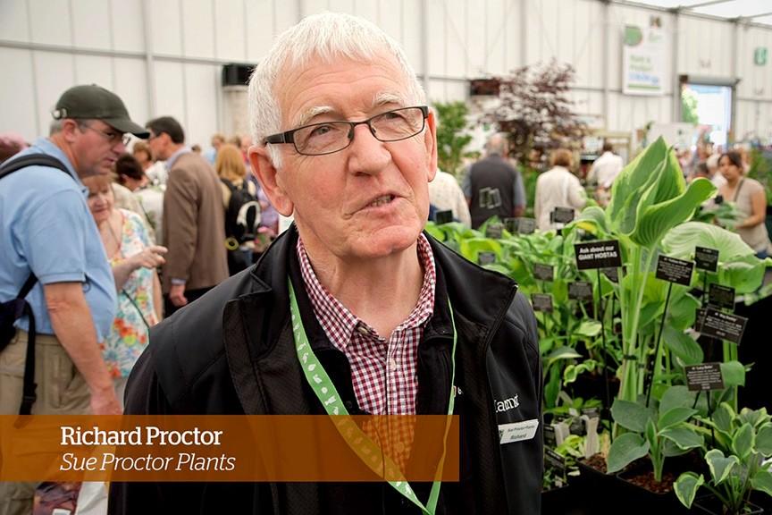 Caring For Hostas Golden Rules Bbc Gardeners World Magazine