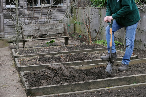Digging over soil in a raised bed