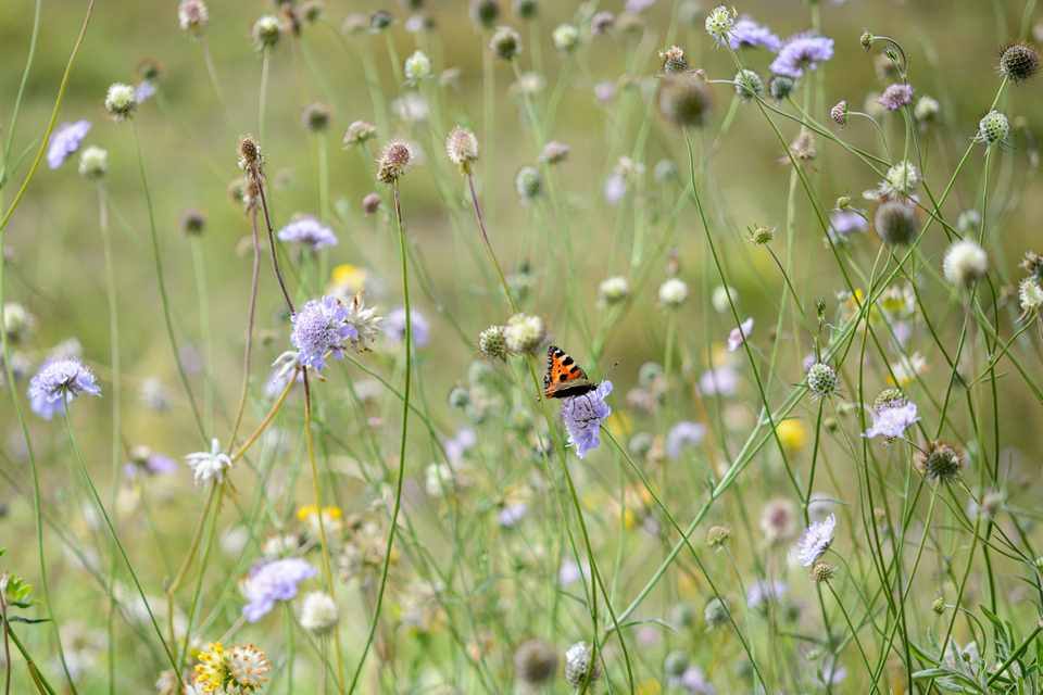 10 Plants for Butterflies