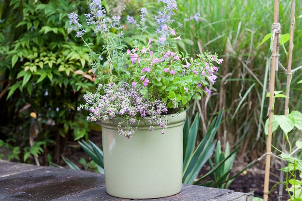 penstemon-in-a-pot-2