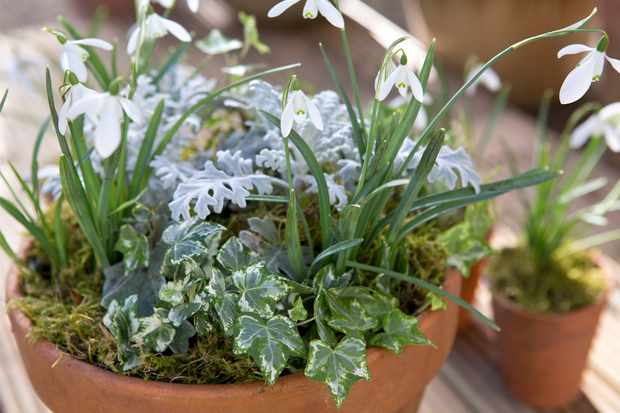 How to create a snowdrop container