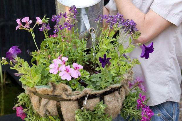 Watering the hanging basket