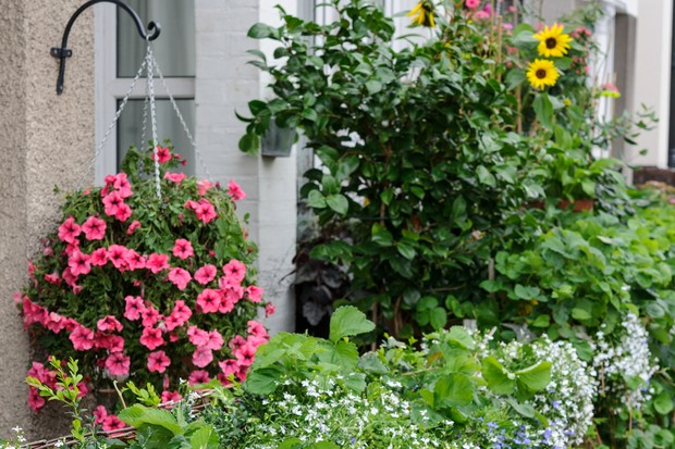 front-garden-full-of-container-grown-bedding-plants-2