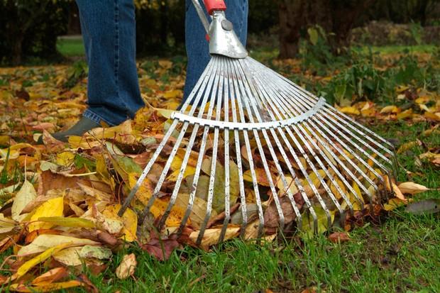 raking-autumn-leaves-2
