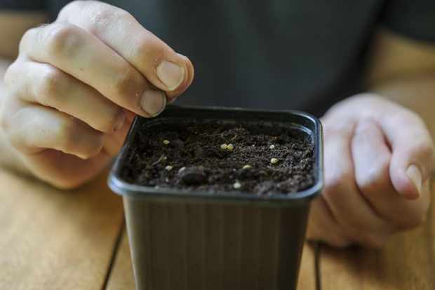 sowing-cacti-seeds-3