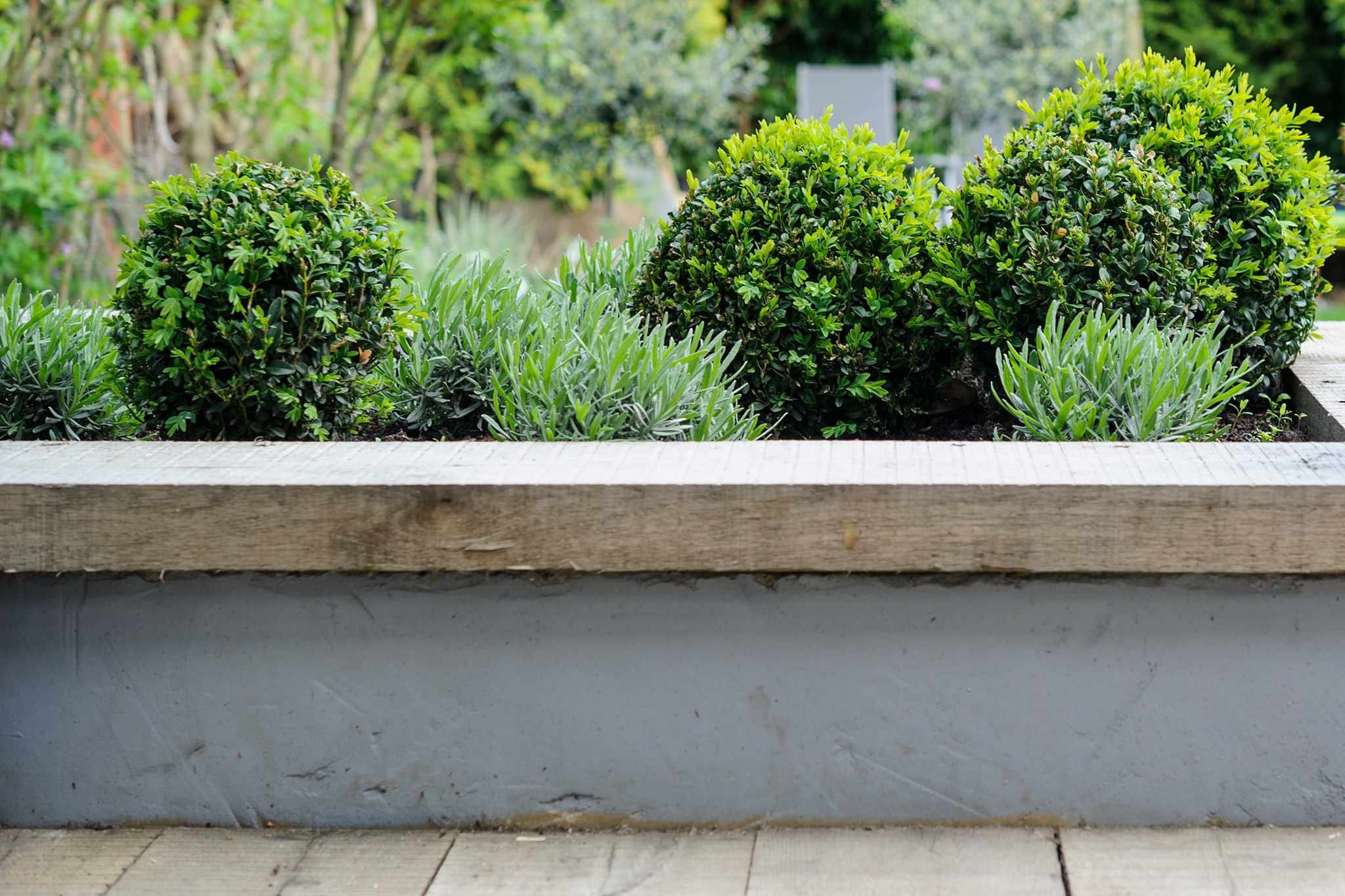 Box balls in a raised bed