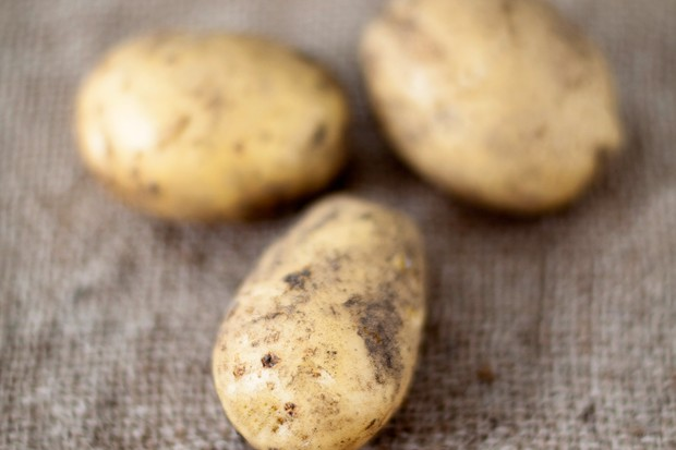White skinned potato 'Nicola'