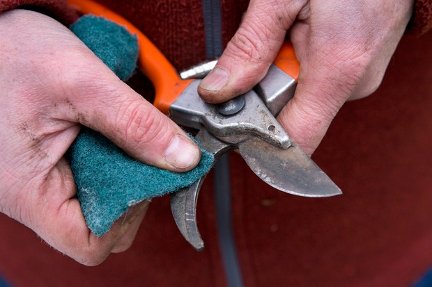 cleaning-secateurs-2