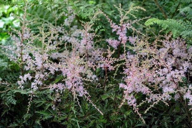 Flowering plants for damp shade gardenersworld the wiry stems of astilbes hold plume like flowerheads of this easy to grow perennial provided the soil is moist astilbes are happy in partial shade mightylinksfo