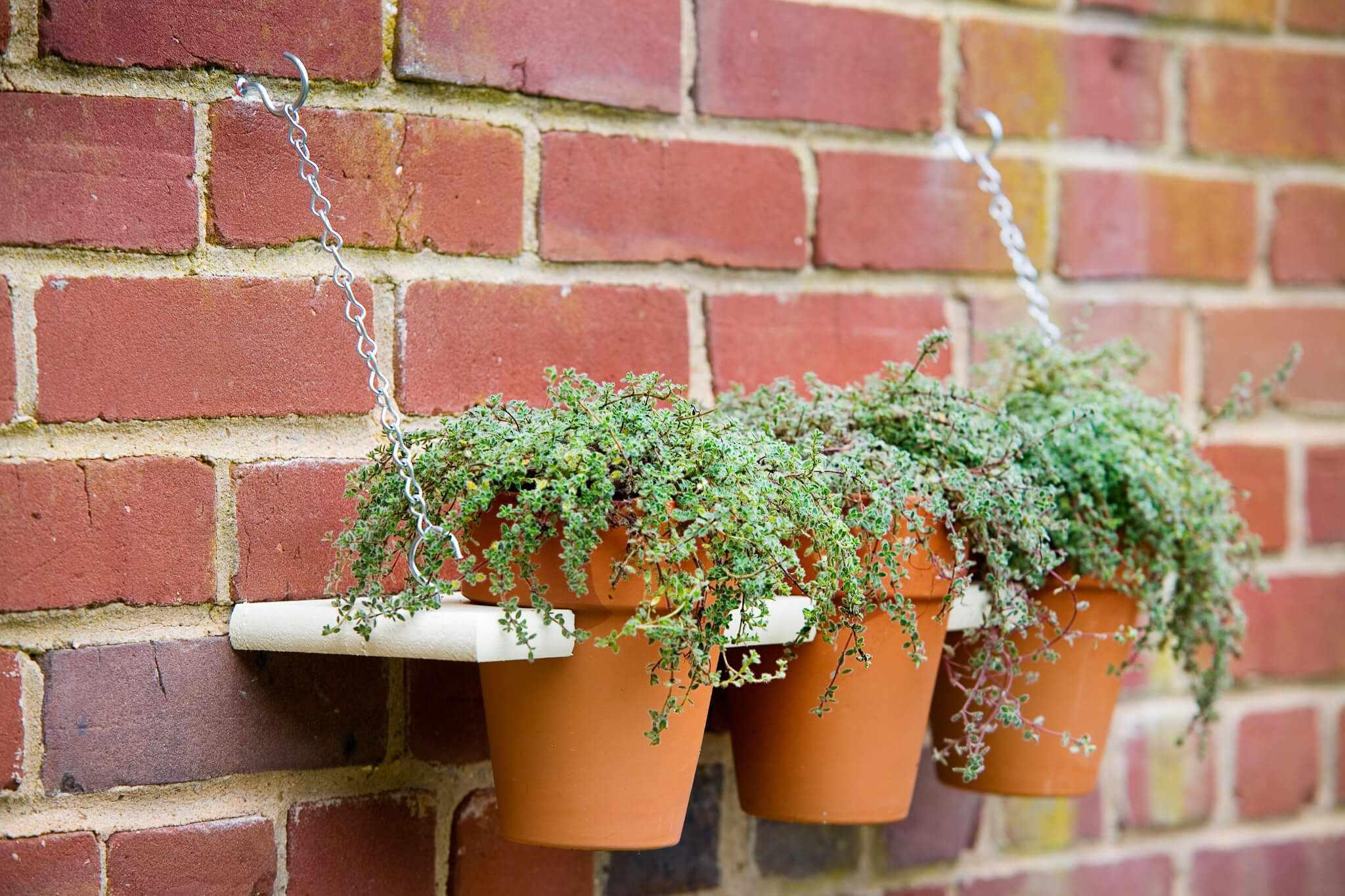 Display shelf for plants