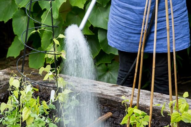 watering-the-veg-plot