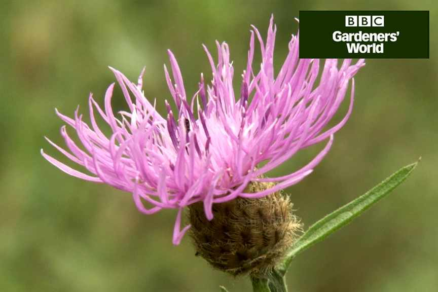 How to grow wildflowers from plugs video