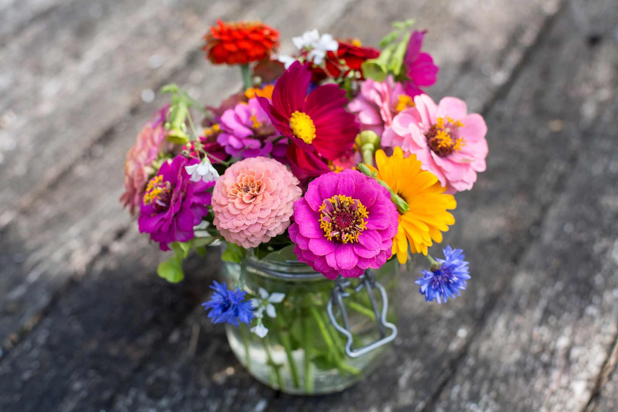 Vase of cut flowers
