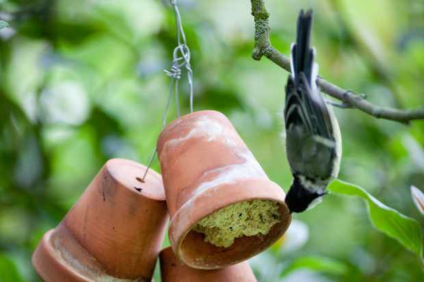 How to make a hanging bird feeder