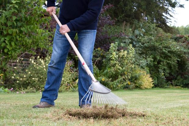 raking-the-lawn-4