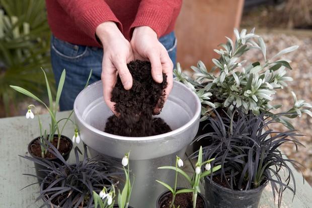 Snowdrop pot display - adding compost