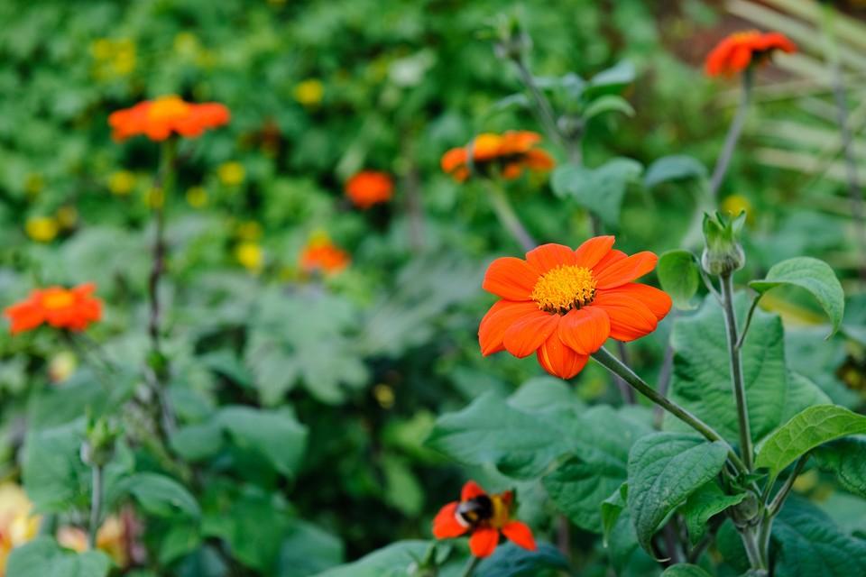 Best Plants With Orange Flowers Bbc Gardeners World Magazine