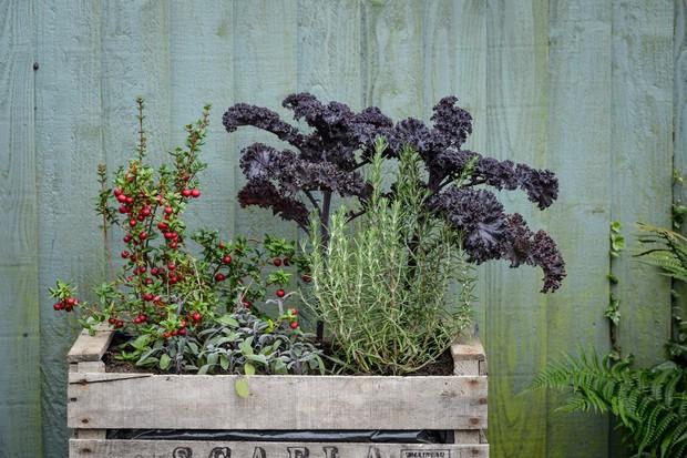 patio-crops-2