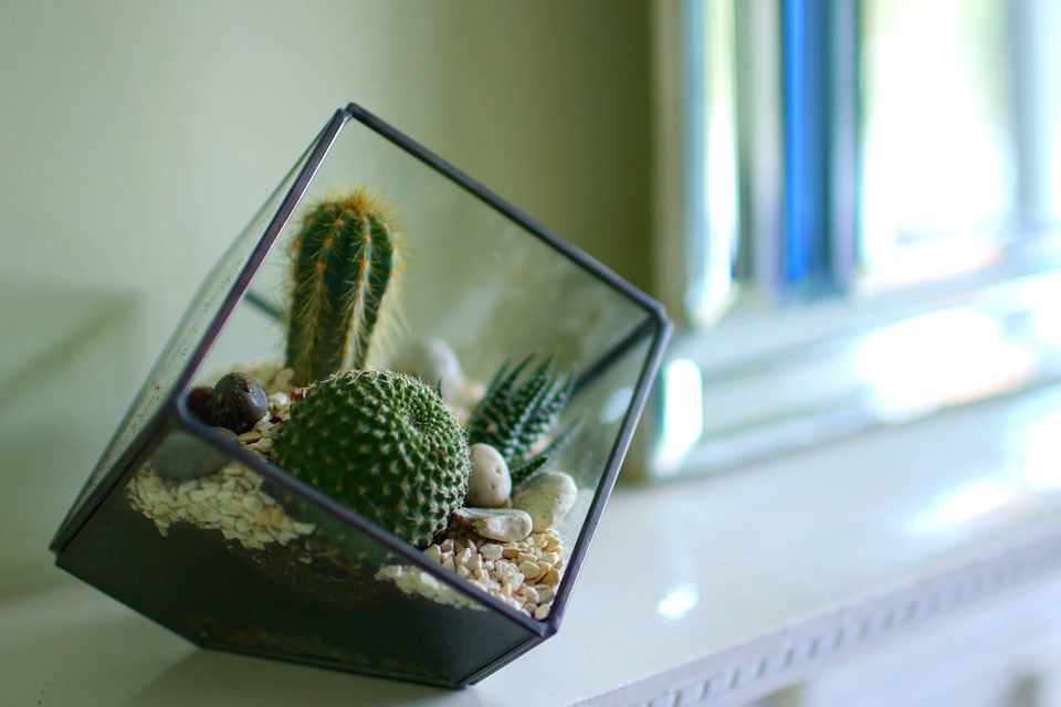 No Fuss Guide Cacti and succulent terrarium