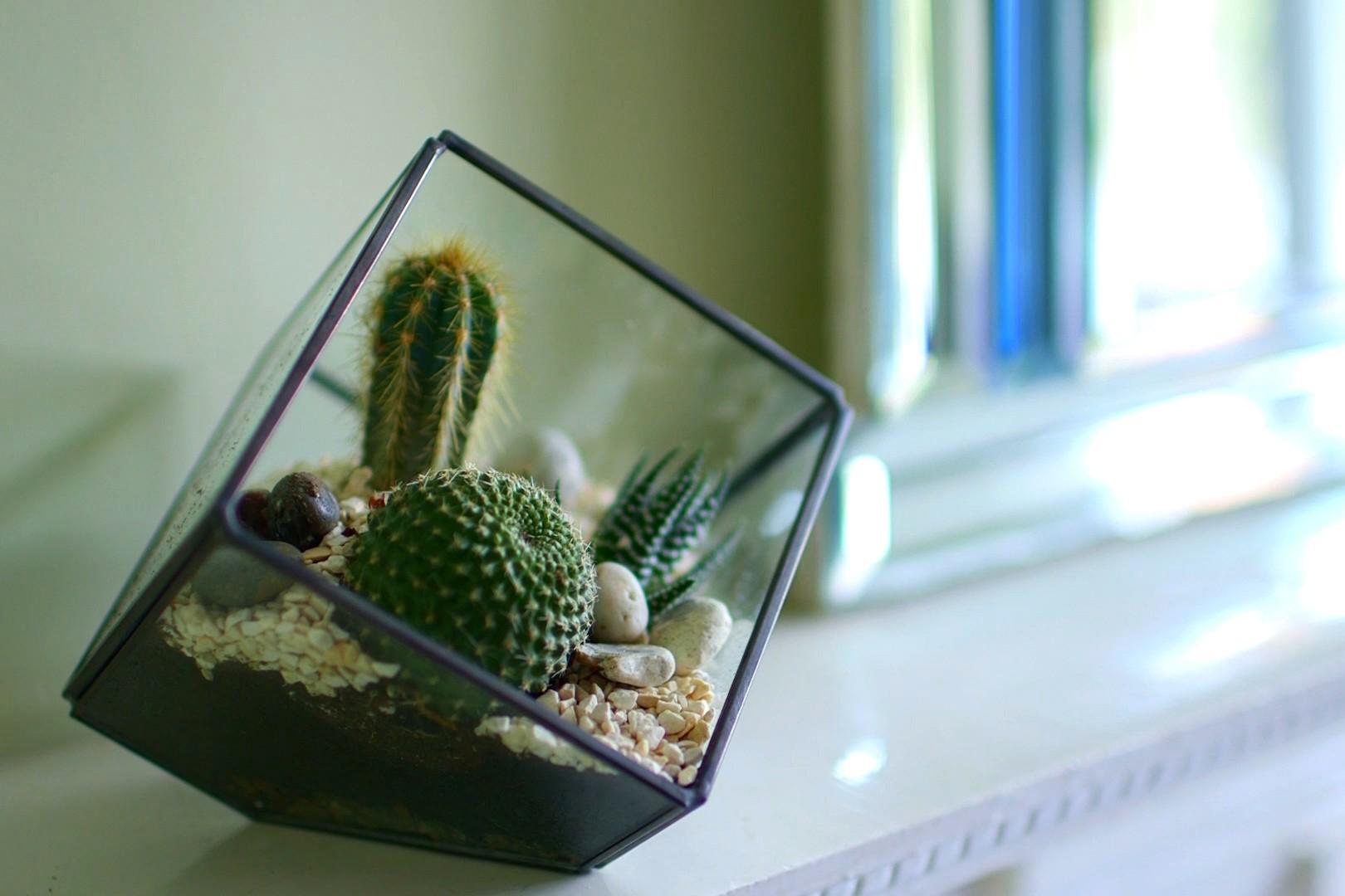 No Fuss Guide Cacti and succulent terrarium
