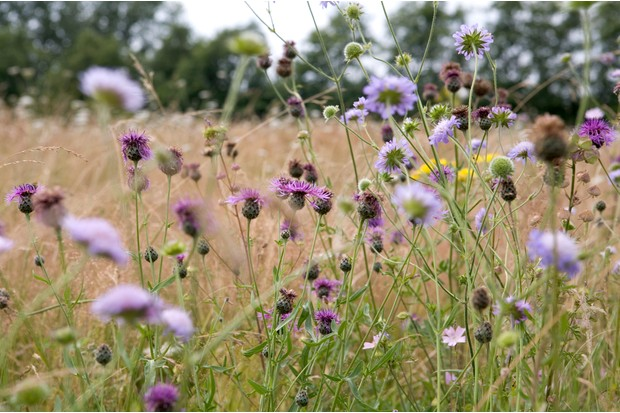 Create a wildflower meadow - finished wildflower meadow