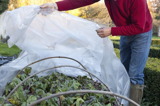 Protecting plants in winter - covering crops with a cloche