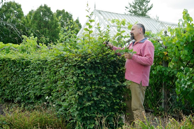 Assessing the hedge before pruning