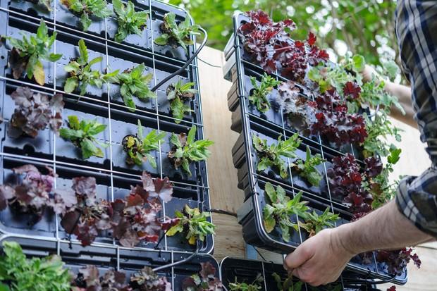 salad-leaves-growing-in-guttering-3