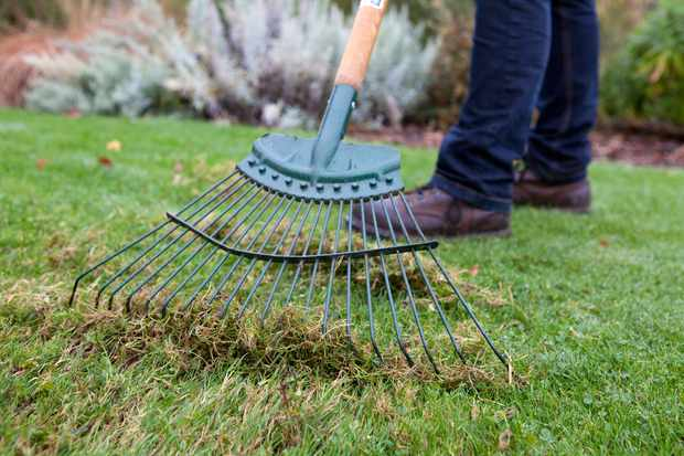 raking-the-lawn-3