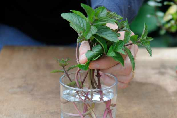 adding-the-stems-to-a-glass-of-water-2