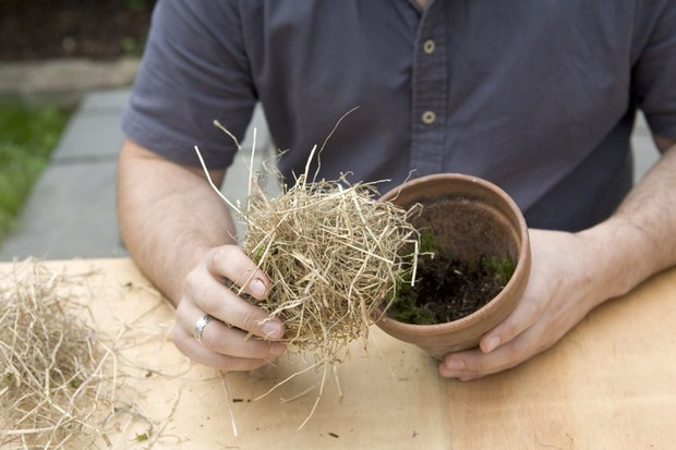 Adding hay to the pot